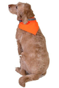Dog Not Gone Visibility Products Collar Kerchief