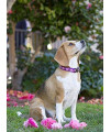 "LupinePet Originals 3/4"" Rose Garden 13-22"" Adjustable Collar for Medium and Larger Dogs"