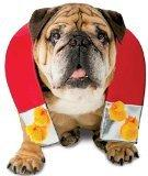 Rasta Imposta Chick Magnet Dog Costume, Medium/Large