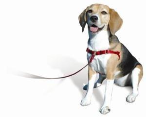 Sense-Ible No-Pull Dog Harness - Red Xsmall