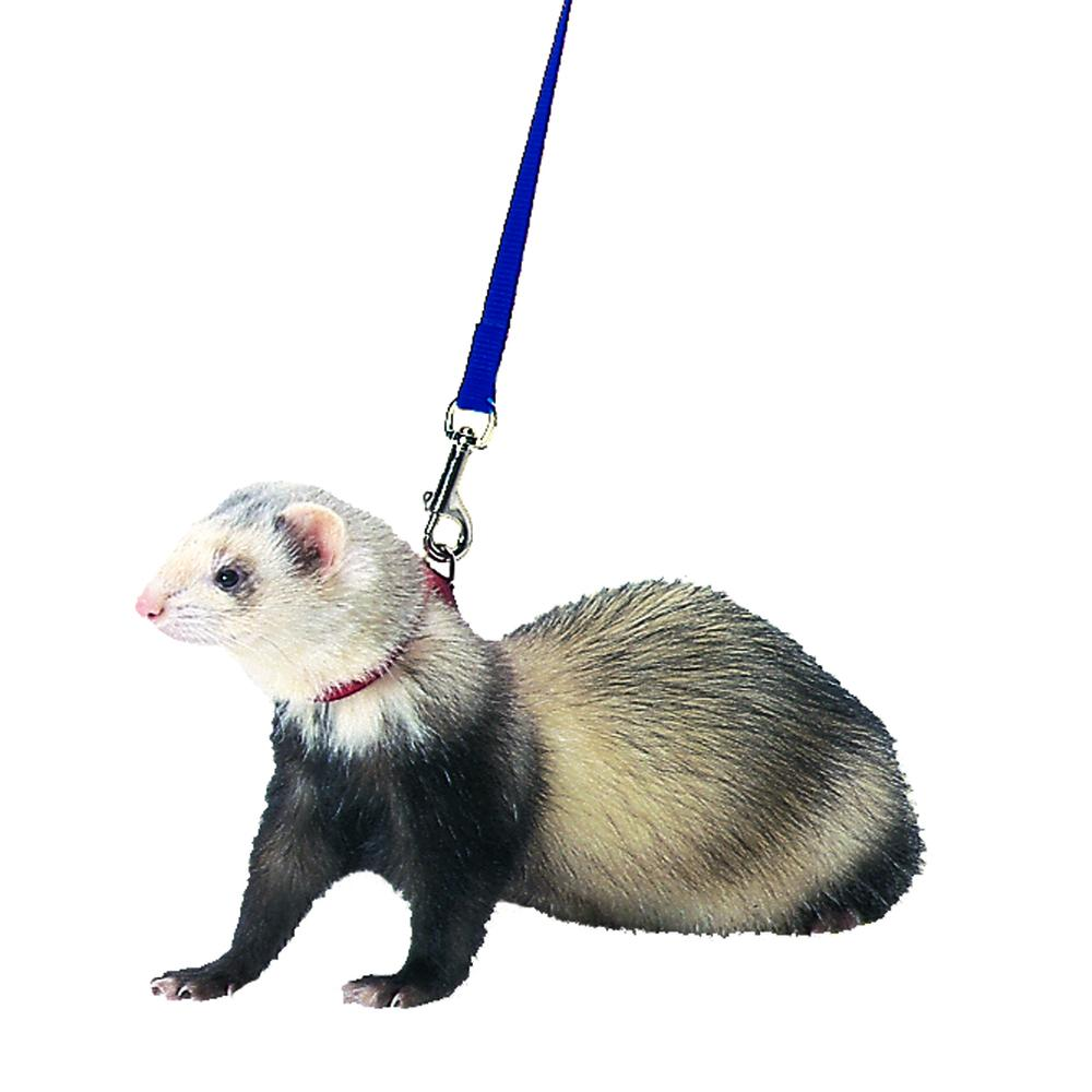 Marshall Pet Royal Blue Ferret Harness And Lead 48 In 766501000948